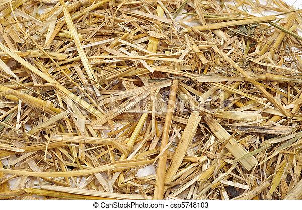 straw - csp5748103