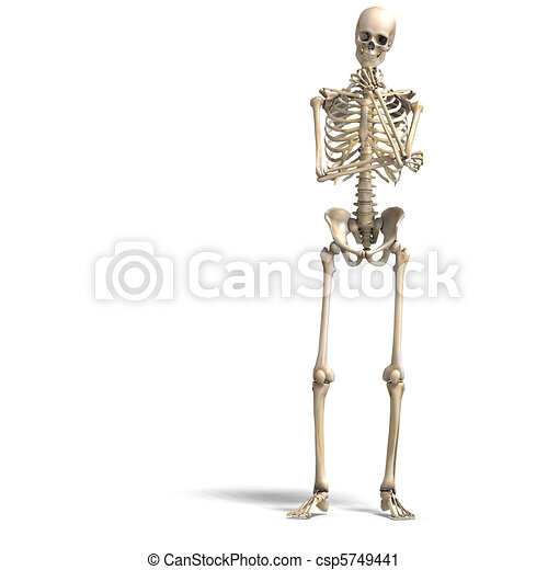 anatomical correct male skeleton. 3D rendering and shadow over white - csp5749441