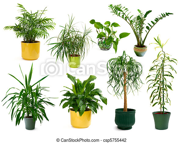 Eight different indoor plants in a set - csp5755442
