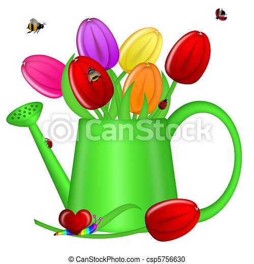 Watering Can with Spring Tulip Flowers - csp5756630