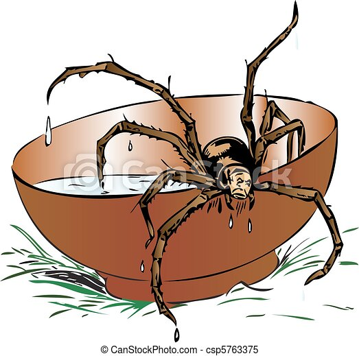Wet spider coming out of a bowl - csp5763375