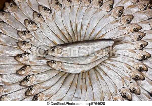 salted sardines - csp5764620