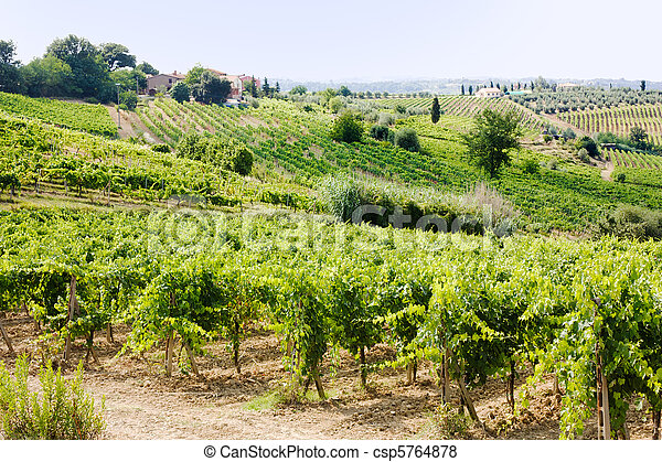vineyard in Tuscany - csp5764878
