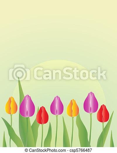 tulip flowers in springtime - csp5766487