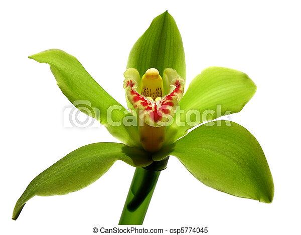 images de fleurir orchid e cymbidium sessa vert beaut famille csp5774045 recherchez. Black Bedroom Furniture Sets. Home Design Ideas