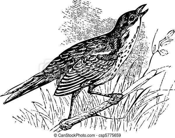 Saltmarsh sharp-tailed sparrow singing - csp5775659