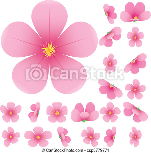 Cherry blossom, flowers of sakura, set, pink, flowers collection, vector illustration - csp5779771