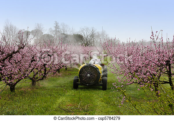 spraying of peach - csp5784279