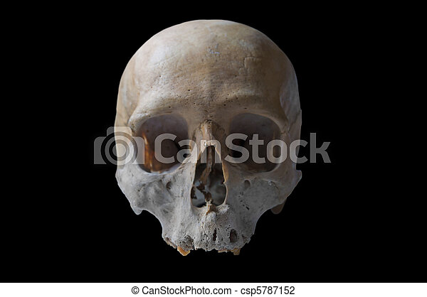 Frontal View of Skull Human Skull in Front View