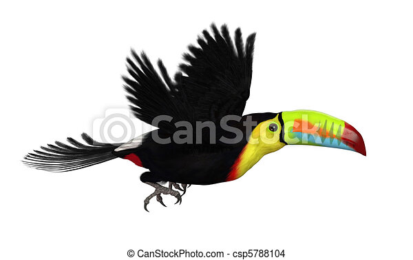 How to Draw a Toucan Flying How to Draw a Toucan Flying