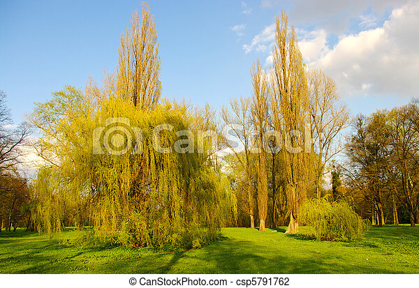 Spring scenery with few willows - csp5791762