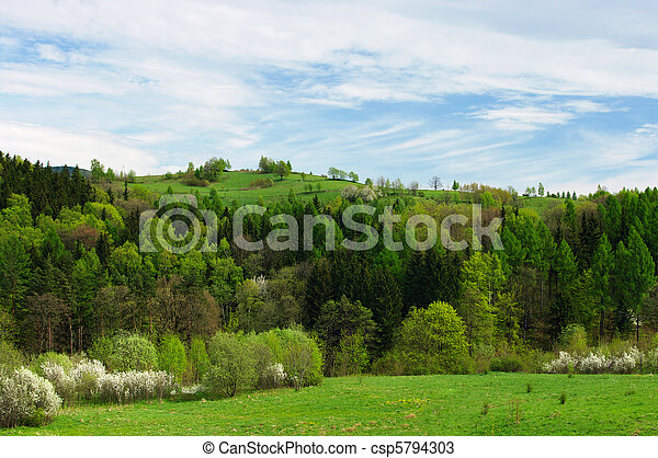 Spring scenery with fresh grass and flowered trees - csp5794303