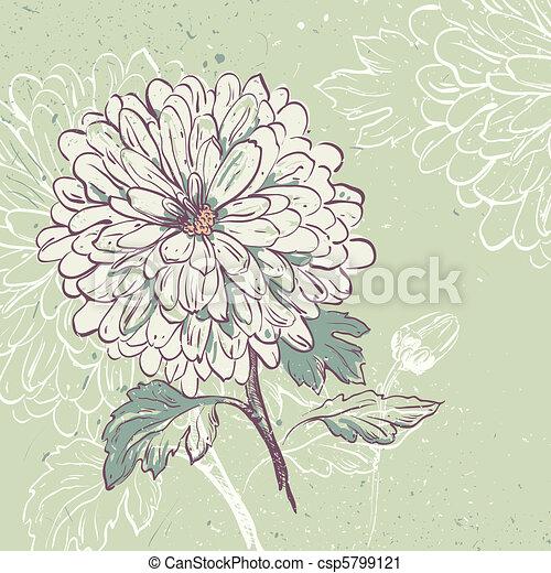 Blooming Chrysanthemum - csp5799121