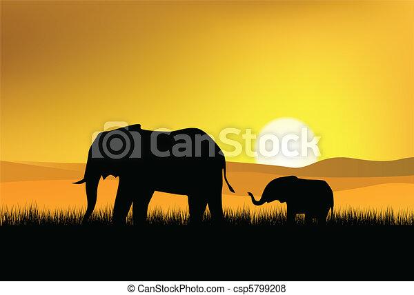 elephant in the wild - csp5799208