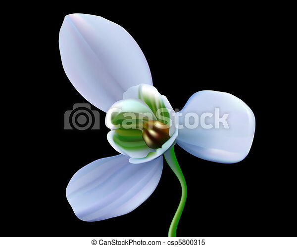 vecteur clipart de fleur perce neige perce neige fleur sur a noir fond csp5800315. Black Bedroom Furniture Sets. Home Design Ideas