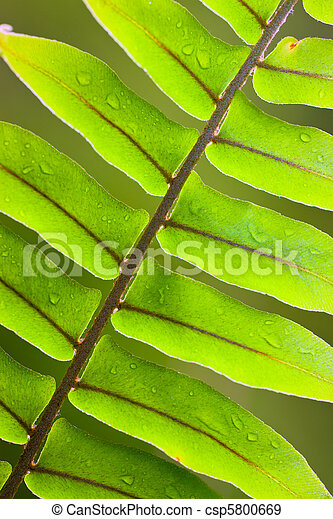 Beautiful lush fern frond - csp5800669