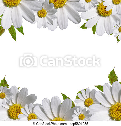 daisy flowers border with copy space  - csp5801285