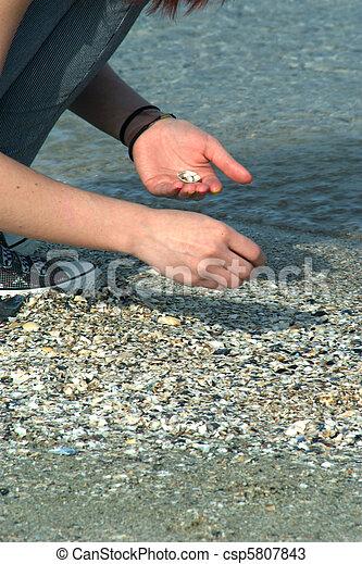 Picking shells - csp5807843