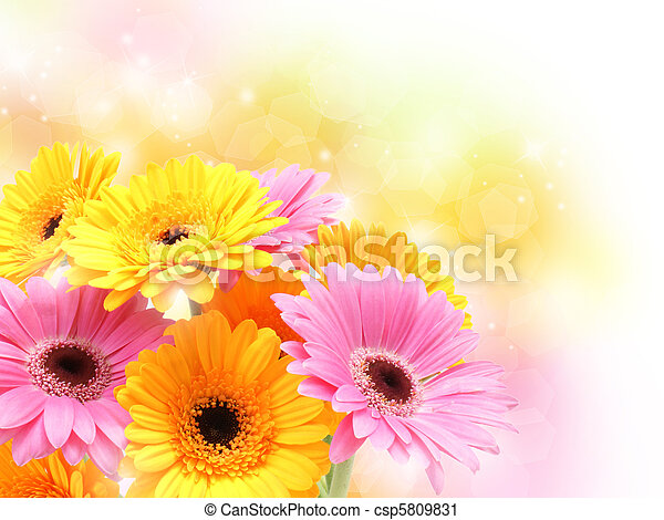 Gerbera daisies on pastel sparkly background - csp5809831