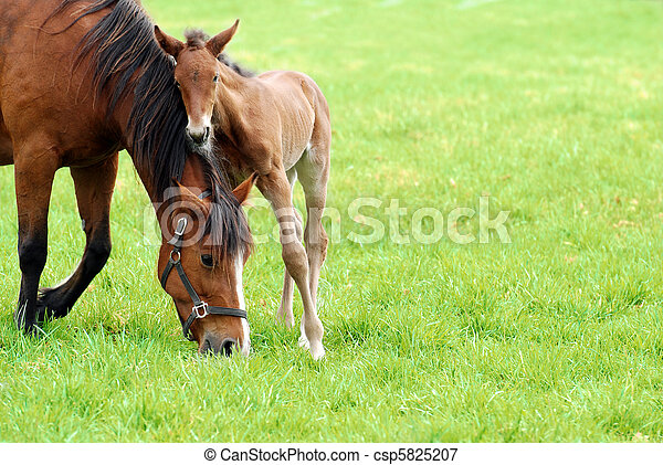 mare and her foal - csp5825207