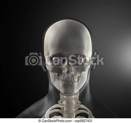 Male Human Head X-ray Front view - csp5827431
