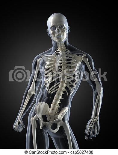 Human Body Medical Scan - csp5827480