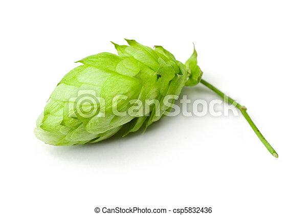 One hop cone - csp5832436