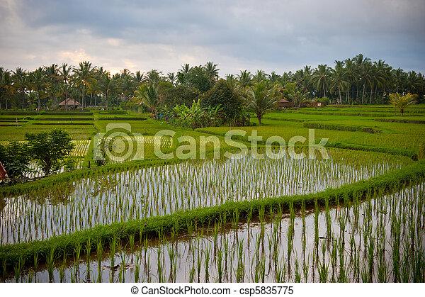 rice terraces of bali, indonesia - csp5835775