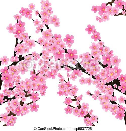 Cherry blossom, flowers of sakura, tree brunch, spring background,vector illustration - csp5837725