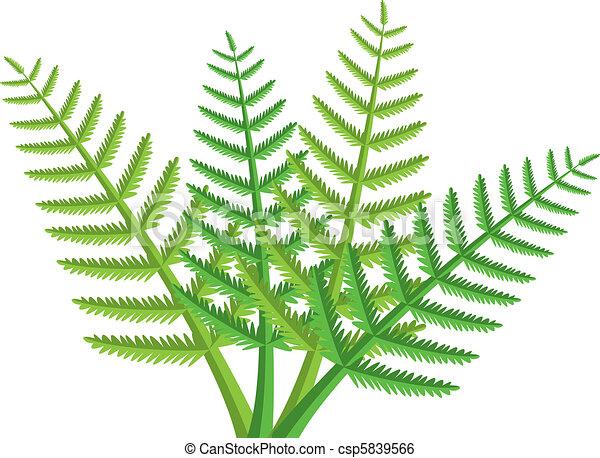 Clip Art de vectores de helecho, hojas - vector, diseño, verde ...
