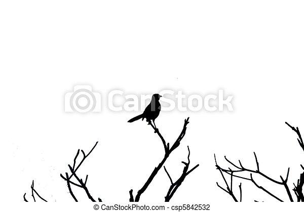 Silhouette bird - csp5842532