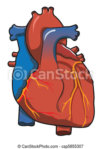 Human Heart system With Isolated White Background - csp5855307
