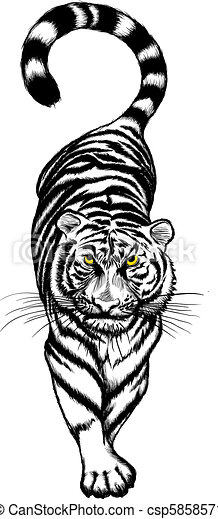 Clip art vecteur de tigre blanc noir acroupissement - Tigre blanc dessin ...