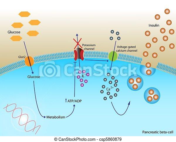 Insulin secretion - csp5860879