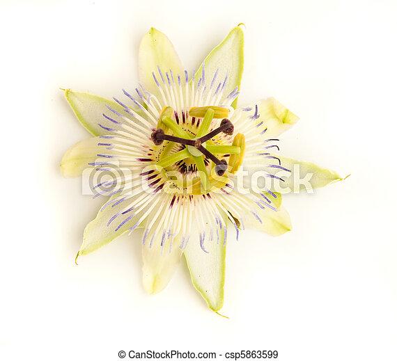 passion fruit flower - csp5863599