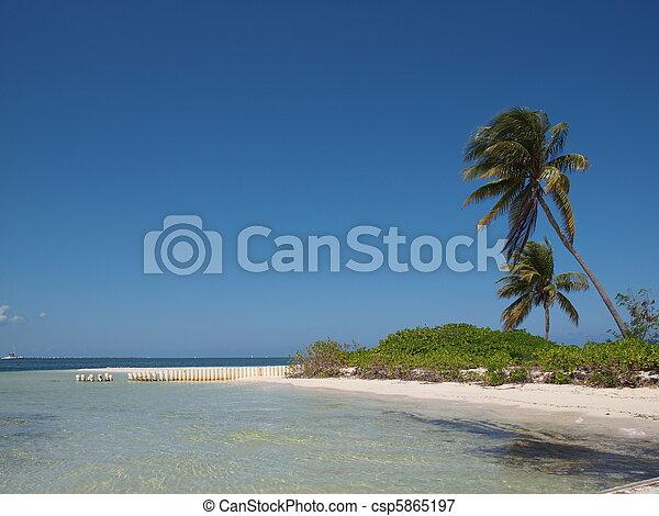 Cayman Islands - Starfish Point - csp5865197