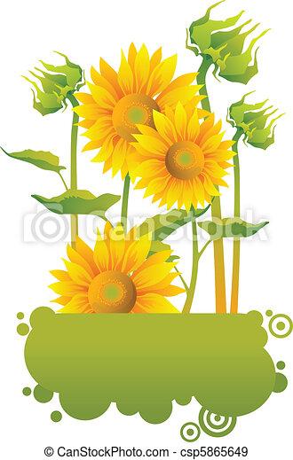 Beautiful yellow Sunflowers - csp5865649