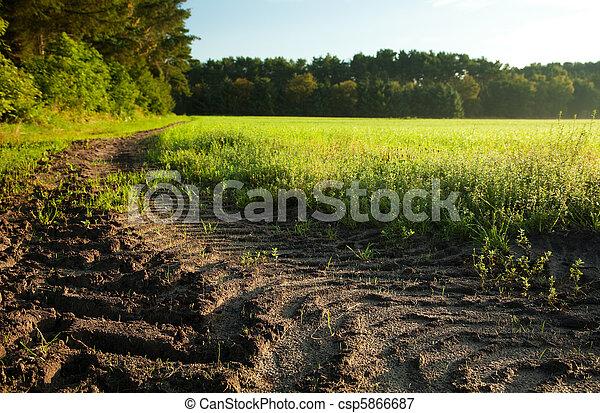 verão, pequeno, árvore, céu, verde, capim, chão - csp5866687