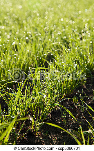 verão, pequeno, árvore, verde, capim, chão - csp5866701