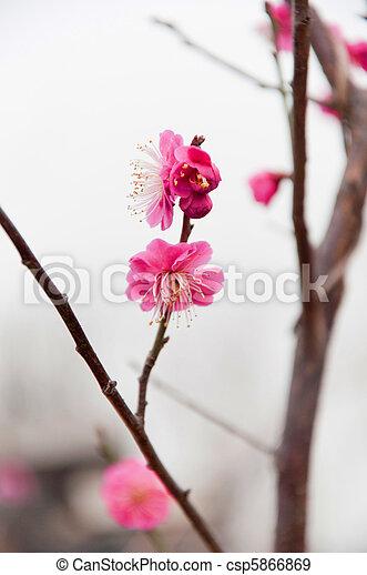 mei hua flower 3 - csp5866869