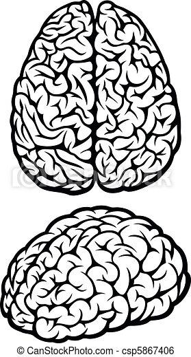 Brain - csp5867406