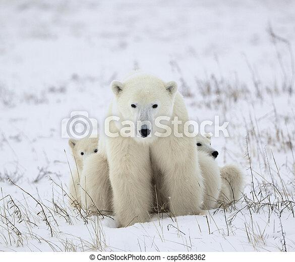 Polar she-bear with cubs. - csp5868362