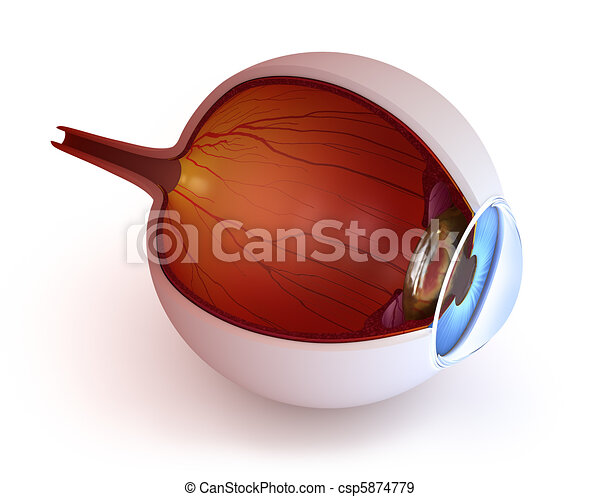 Anatomy of eye - inner structure - csp5874779