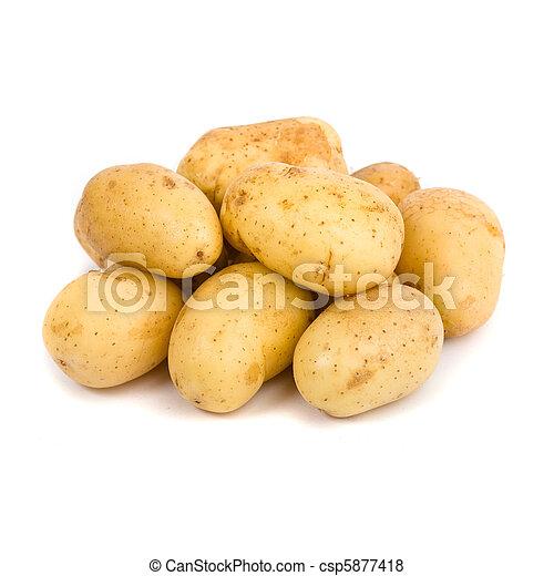 potato white background - csp5877418