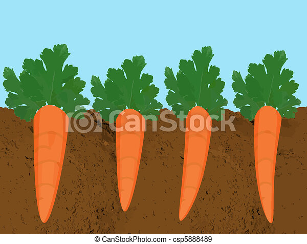 how to grow perfect carrots