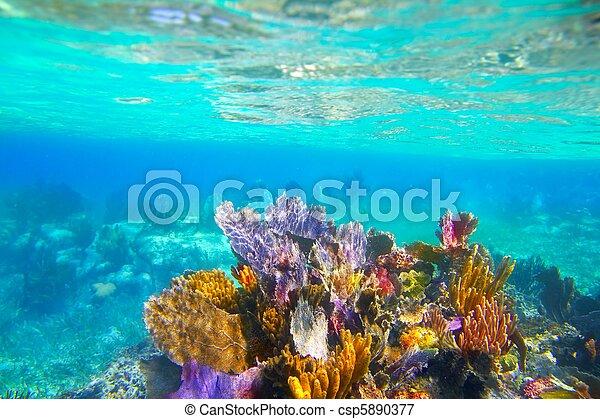 Mayan Riviera reef snorkel underwater coral paradise - csp5890377