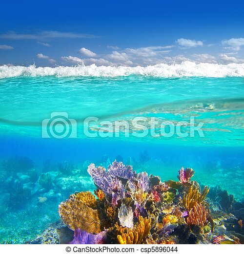 Mayan Riviera coral reef underwater up down waterline - csp5896044