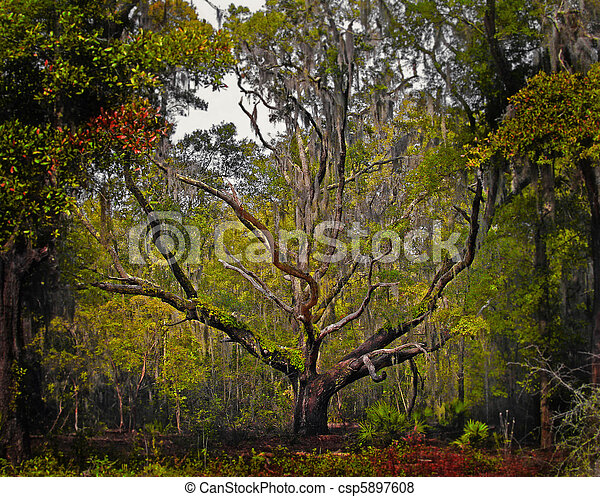 Beautiful live oak tree on a spring day