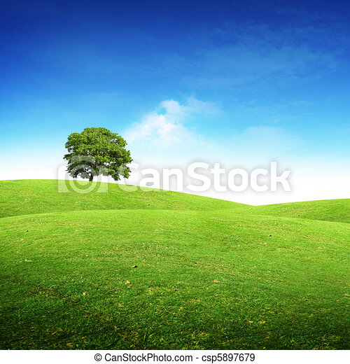 Summer Scenic Landscape - csp5897679