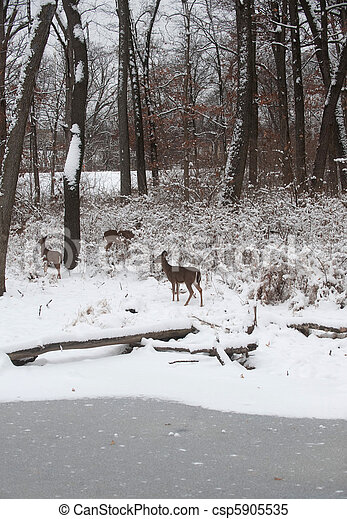 Whitetail deer in snow covered woods - csp5905535